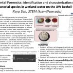 Environmental Forensics: Identification and Characterization of E. coli and  other Bacterial Species in Wetland Water on UWB Campus – UW Bothell Office  of Research – Undergraduate Research Database