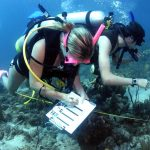 How to Become a Marine Biologist - Dr Abalone